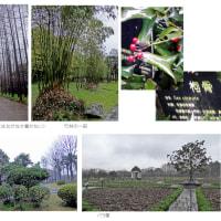 中国・上海植物園を見学