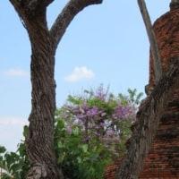 Thailand / Thailand Trip ( 15 ) ( タイ旅行)
