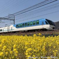 【鉄道写真】「しまかぜ」と菜の花~近鉄特急を撮る(13)~