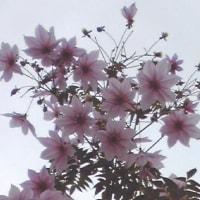 今頃咲く花