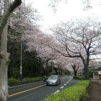 桜への思い