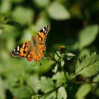蝶よ、花よって、、、羨ましい?