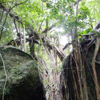 大岩から自然遺産の森を俯瞰!【屋久島西部林道エコツアー】