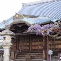今朝(4月23日)の曼陀羅寺