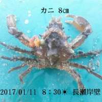 笑転爺の釣行記 1月11日☀ 長瀬・久里浜