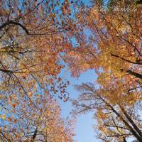 α7Ⅱで師走の紅葉を撮る:岡山県総合グラウンド