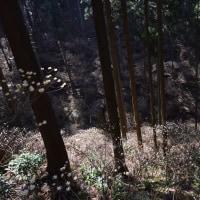 2017/03 栃木鶏足山を往く