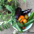 我が家の逸品野菜!