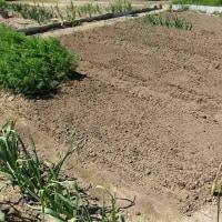 夏野菜の準備_耕運と畝作り