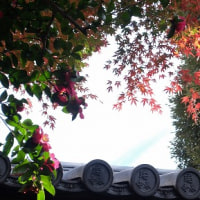 獅子舞の谷の紅葉