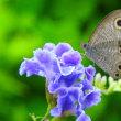 蝶を誘惑したタカラヅカ(^_-)-☆
