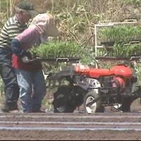 トウモロコシの機械化での植え付け終了しました。
