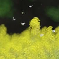 幻想的なチョウの飛翔