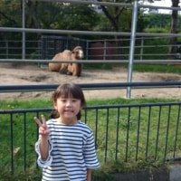 動物園と紅葉❗
