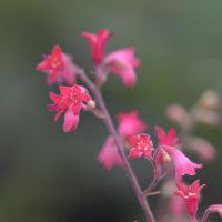 お花さん(1)