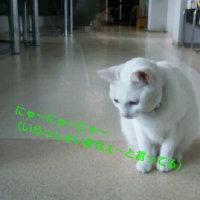 猫に出迎えられるの巻