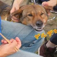 2017 篠山ARK 犬舎お披露目式