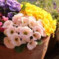 晴れた日曜日の朝の花