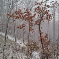 強風に乗って来た雪