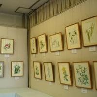 私の植物画展開催中