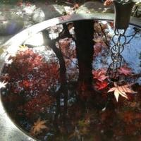 鎌倉 紅葉が素晴らしい覚園寺