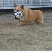 投げるか蹴るか