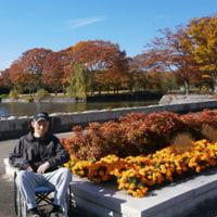 今年の紅葉は万博記念公園で