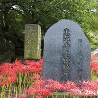 横浜・花の寺、秋の出会い。