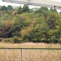 小山池対岸が黄葉し始めました