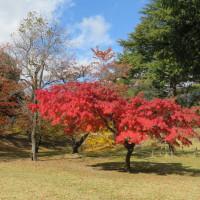 紅葉の季節に(上田にて)