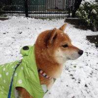 今日の元気 「初雪」