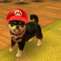 ����Τ��Ѥ�³�����������Σ���[nintendogs+cats�ʣ��ģӡ�]