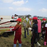10/20(木)3・4年生が稲刈り体験をしました。