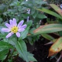 切り戻しの花