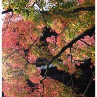 京都 2016 秋 7