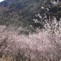スポコミ・カワラ版 3月23日 先負