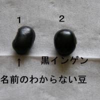 おとんの畑③・・・黒豆はどこ?・・・