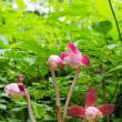 登山道のお花たち