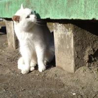 ★ ・・・だって、猫だもの・・・( *¯ ³¯*)ฅ♡❤