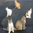 石垣島の猫に会う