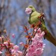 講座のお知らせ「鳥のフィールドサイン観察術」