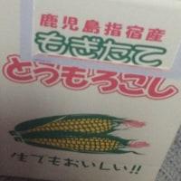 おいしいトウモロコシ