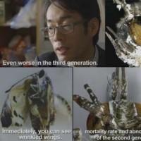 ◯The Fukushima Crisis806; butterflies died.福島から蝶の食べ物を与えた...そして、彼らは死んだ。