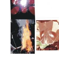 ゼロ磁場 西日本一 氣パワー・開運スポット オーナー姉妹の写真はいぶし銀(12月7日)