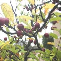 2003-10-25青葉の森01