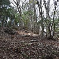 2017/04 金比羅尾根を下る(アカヤシオロード)