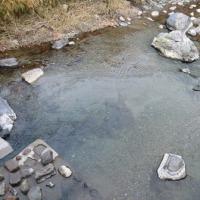 賀茂川水系の秋放流