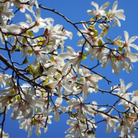 樹にも春来たる