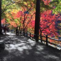 京都の紅葉名所の撮影禁止は野暮だと思う