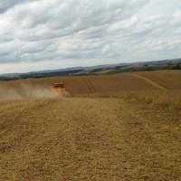 ブラジル収穫順調に進む